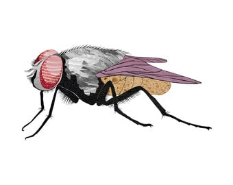Fly - Insect - Nursery Art - Wall Art - 8x8 Fine Art Print - Shakespeare's Menagerie