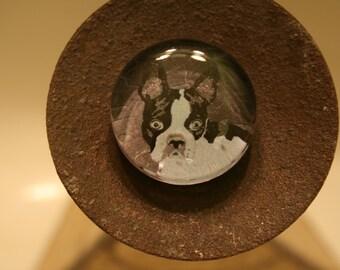 Unique Boston Terrier Glass Magnet