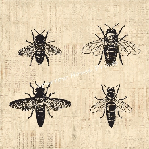 Bee Home Decor: Bees Print Antique Wall Art Bee Home Decor By