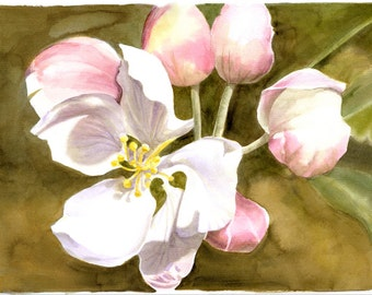 APPLE BLOSSOMS - A Spring cluster of five apple blooms