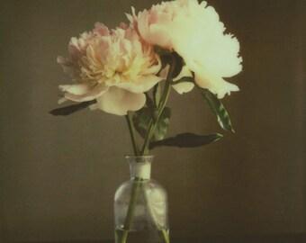 The Peonies | Polaroid Print | Fine Art Photography