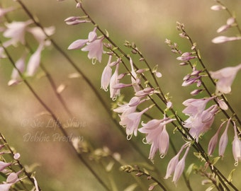 flower photography Cottage Decor bedroom decor bedroom wall art green decor lavender decor Cottage wall art nature photography