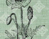 Digital Download Poppy Floral Botanical image, Antique Illustration  c. 1900, digi stamp, digis, digital stamp, Elegant, and beautiful