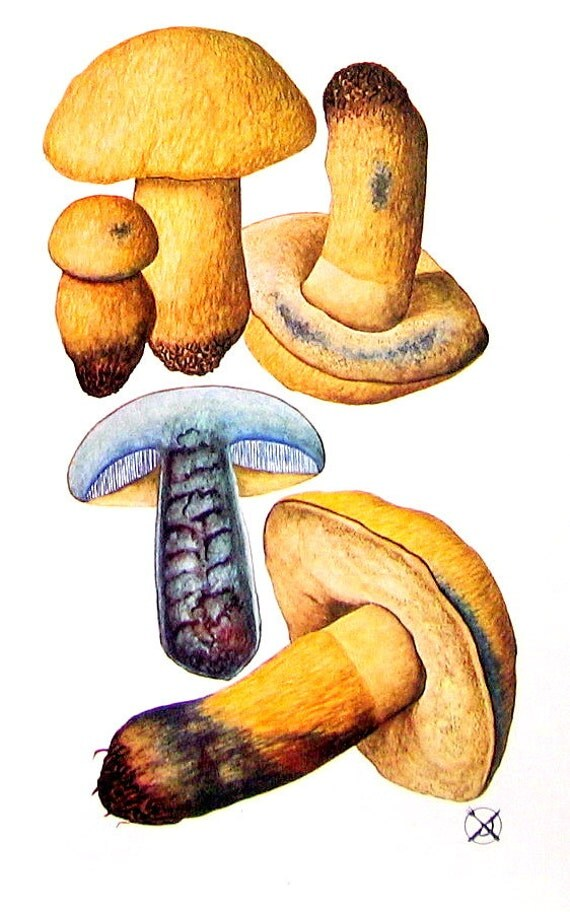 Mushrooms 4 Small Pages Indigo Boletus 1989 Vintage Book