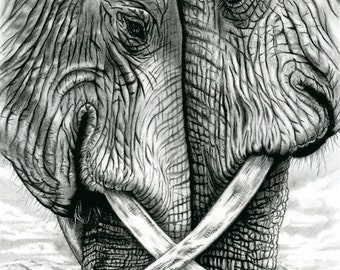 Elephants Artwork Giclee. Charcoal & Pencil. Printed on MOAB Entrada Natural Rag 300