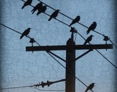 Crows Resting on Telegraph Wires on a Sky Blue Background with Antique Texture - Signed Fine Art Photograph