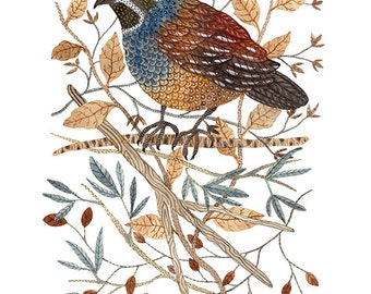 Quail Art Print, game birds, giclee art print, bird art, bird illustration, watercolor print