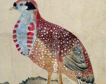 Instant Download Tragopan Bird Red Blue Brown You Print Digital Image 8 x 10