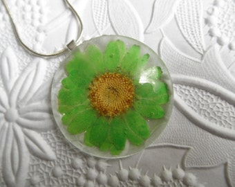 Luscious Lime Green Daisy Domed Glass Round Pressed Flower Pendant-Nature's Wearable Art-Gifts Under 30-Symbolizes Innocence, Loyal Love