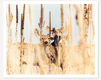 Be Still - Deer Photograph - Animal Photography - Colorado Wildlife Photo - Yellow Golden Brown Tan Beige Blue Color Photography