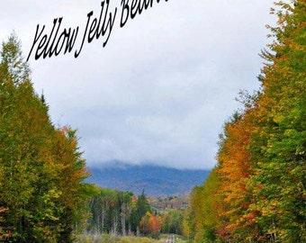 Feeling Fall - 8x10 Fine Art Photograph - Train Rails in Autumn Countryside