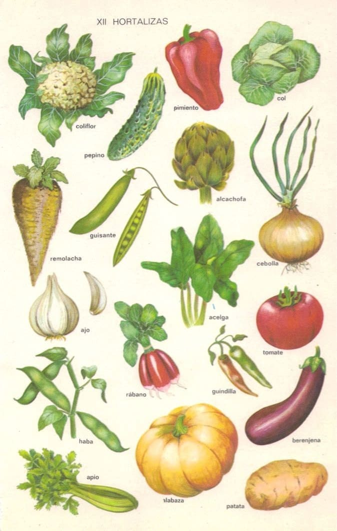 VEGETABLES Vintage Illustrated Poster from 1957 Vocabulary