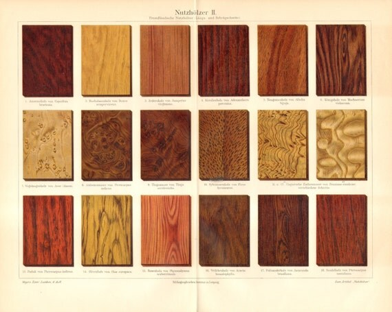 1904 Wood Types Maple Acer Palisander Rosewood Ash