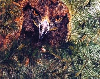 Eagle Watercolor Art Painting Print, Birds of Prey Art