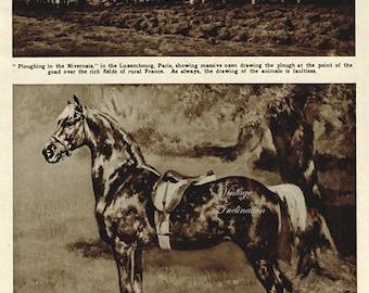 Antique Print, 1920s Dappled Horse, wall art vintage photogravure animals chart illustration