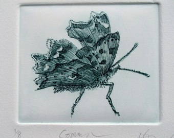 Comma Butterfly. Fine art print. Limited edition