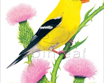 Gold Finch Art Print -- Illustration of Male Yellow Finch Bird