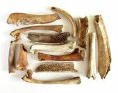 13 Woodland Bone Fragments.  Real nature-cleaned animal bones.
