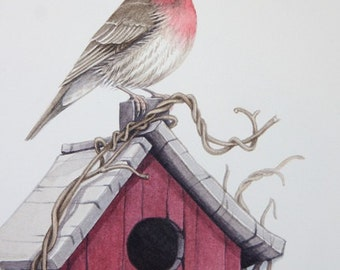 House finch with birdhouse original watercolor painting
