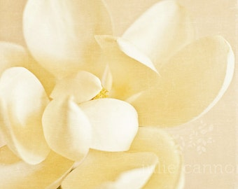 White and cream magnolia - Fine art photography print