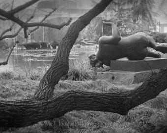 Maillol Sculpture Photo, Norton Simon Museum, Tree and Garden Photo, Art of Maillol, The Air Sculpture, Photo Art, Reclining Nude Art