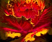 Nature Photography, Plant Print, Macro Photography, Red Fine Art Print, Photo Wall Decor, Kitchen Decor, Awakening by Paula DiLeo_121313