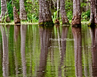 Louisiana Swamp Reflection II (Photo on Canvas)