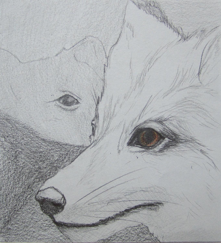original grey fox drawing minimalist animal illustration