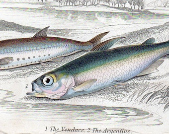 Hand Painted Fish Print by Sir William Jardine 1832 Antique The Vendace and The Argentine Rare Marine Aquatic Art Print Home Decor