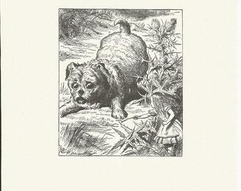 Puppy, Alice in Wonderland, Vintage Book Plate, Book Print, John Tenniel, BandW Print, Lewis Carroll, 1980s
