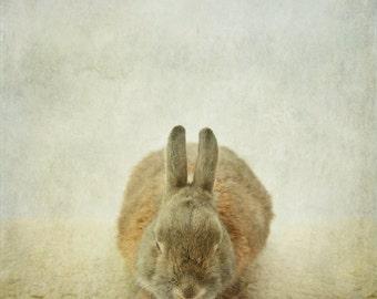Rabbit photo, bunny photo print, easter rabbit, zen art, prayer, meditation, nursery art print