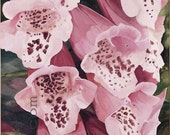 Watercolor Painting Botanical Garden Flower Pink Foxglove Original Artwork by Laurie Rohner