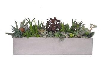 Mixed succulent in a 8 5 cylinder white ceramic pot - Rectangular succulent planter ...