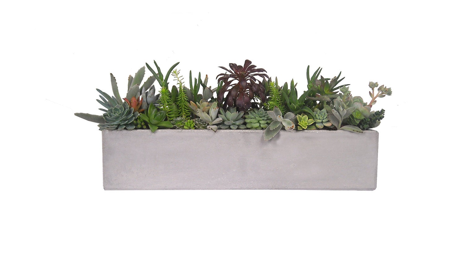 Succulents In A Concrete 18 Grey Rectangular Planter By Window27