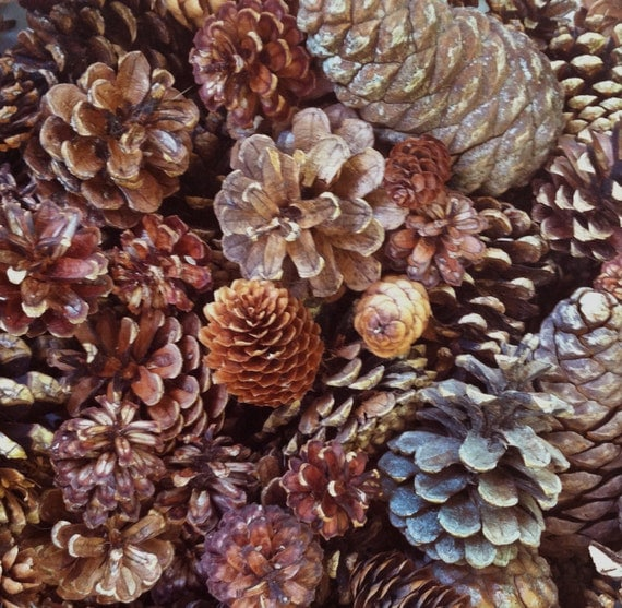 100 assorted pine cones spruce cones small by naturescavenger for Small pine cone crafts