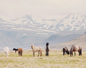 "Iceland Photography, Horse Photography, Nursery Art, Pastel Decor, Nature Print, Large Wall Art, Spring  ""All the Pretty Horses"""