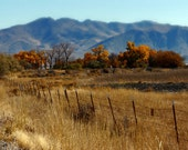 Autumn Rustic Fields Photography Desert Sagebrush Instant Download  Digital Download Commercial Use Digital Graphics