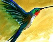 Blue Ruby-Throated Hummingbird,  print, 8 x1 0, yellow, flight, bird, garden, holiday, hostess gift