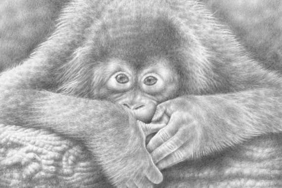 A4 Wildlife Giclee Fine Art Print of a Baby Orangutan, Wall Art, Animal Art Gift, Drawing, Illustration, Art Print