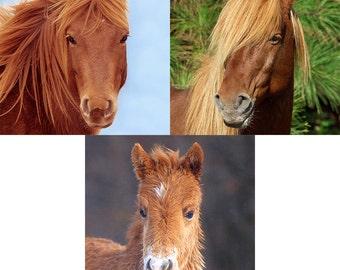 Wild Horse Animal Photography, Set of 3 8x10 Prints, Chincoteague Pony, Assateague Island, Nursery & Kids Wall Decor Art, Equine Wildlife