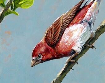 Purple Finch - Original Art - Songbird Wildlife Acrylic Painting