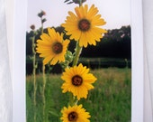 Floral Photo Card Compass Plant Yellow Flowers