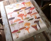 Vintage Style Les Champignons Mushroom Poster Decorative Wrap and Craft Paper by Cavallini