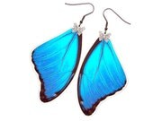 Handmade Real Butterfly Wing Earrings (Blue Morpho Didius Forewing - E191)