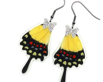 Real Butterfly Wing Earrings  (Papilio Torquatus Hindwing - E158)