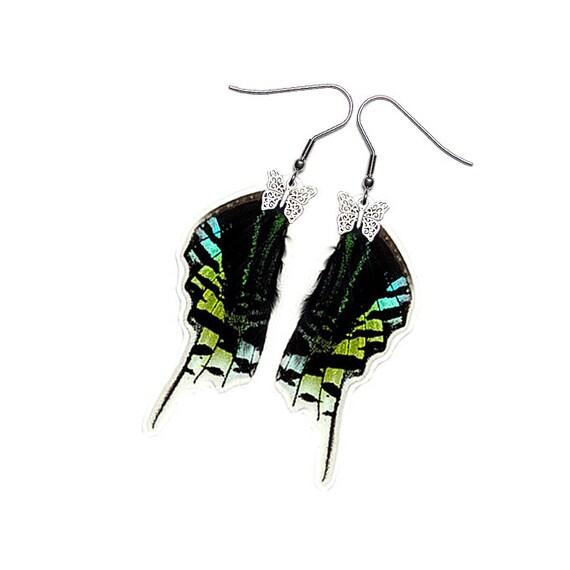 Real Butterfly Wing Earrings (Urania Leilus HW - E182)