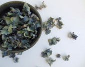 summer is saved - 2014 hydrangea blossoms beeswax - 2 ounces, over 300 flowers, generous 4 cups