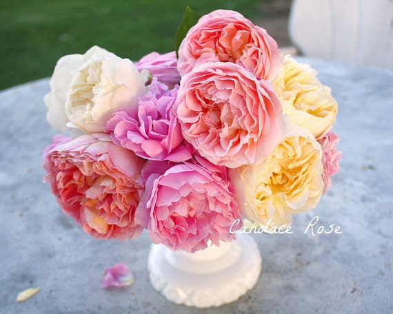 Pink, Peach and Yellow English Roses in Milk Glass Vase - 8 x 10 Fine Art Photography Print