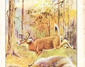 1926 Animal Print - Virginia Whitetail Deer - Vintage Antique Natural History Home Decor Art Illustration for Framing