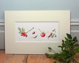 Limited Edition Print 'Rose hips'.